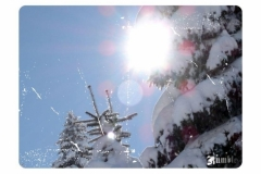 snowtree_n