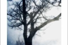 tree11n