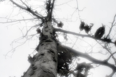 tree1_n