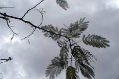tree2_n