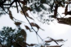 tree7_n