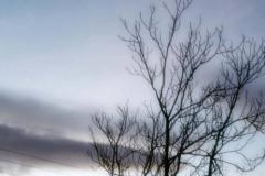 tree92_n